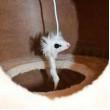 Kočičí škrabadlo MÍNA L - béžová