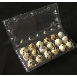 Transportní obal na 18 ks křepelčích vajec - blistr