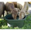 Nádrž pastevní s výpustí, 380 litrů