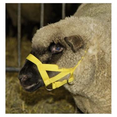 Ohlávka pro ovce a berany, žlutá