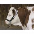 Ohlávka pro krávy Top s řetízkem pod bradou