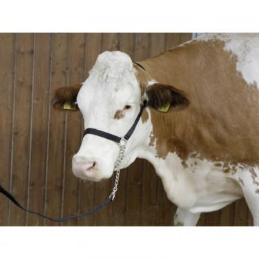 Ohlávka pro krávy předváděcí s vodítkem